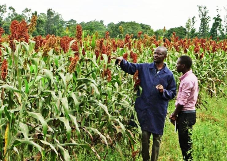 Uganda: A School Of Agribusiness For Young Entrepreneurs, With The Contribution Of The Church | Comboni Missionaries