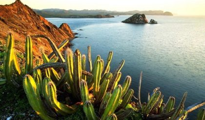 Mexico: Cactus, the richness of the people   Comboni Missionaries