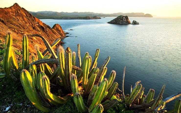 Mexico: Cactus, the richness of the people | Comboni Missionaries