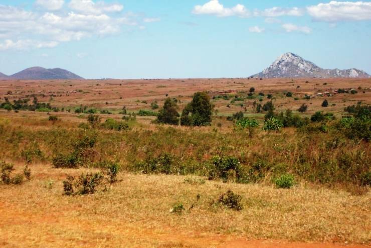 Zambia: Fighting deforestation by Agness Chileya