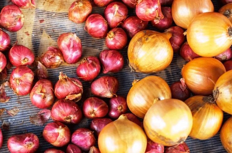 Plants & People: Onion – An Excellent Source Of Vitamins | Comboni Missionaries