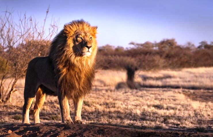 Oral Literature: The Lion – The Hare & The Hyena   Comboni Missionaries