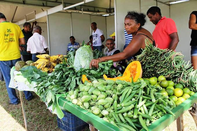 Brazil: Agroecology Is The Future | Comboni Missionaries