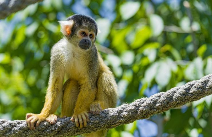 Oral Literature: How The Monkeys Saved The Fish | Comboni Missionaries